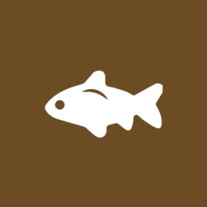 Pesca Desportiva - O que Fazer? Estalagem Pateira de Fermentelos